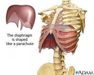 223681_diaphragm